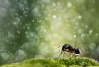 创意摄影镜头下的梦幻昆虫照