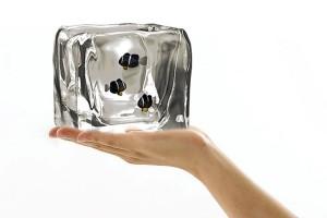 冰块样式的创意鱼缸设计