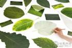 绿叶样式的创意明信片信笺