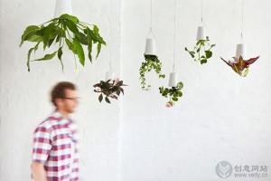 倒立生长的创意室内盆栽植物