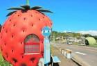 创意水果巴士站台