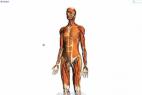 Google实验室推出人体透视学习的新产品