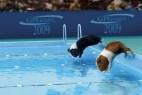 荷兰猪的奥林匹克运动会