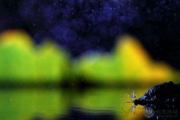 梦幻昆虫照(八)