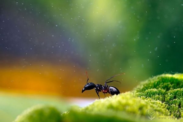 梦幻昆虫照(十一)