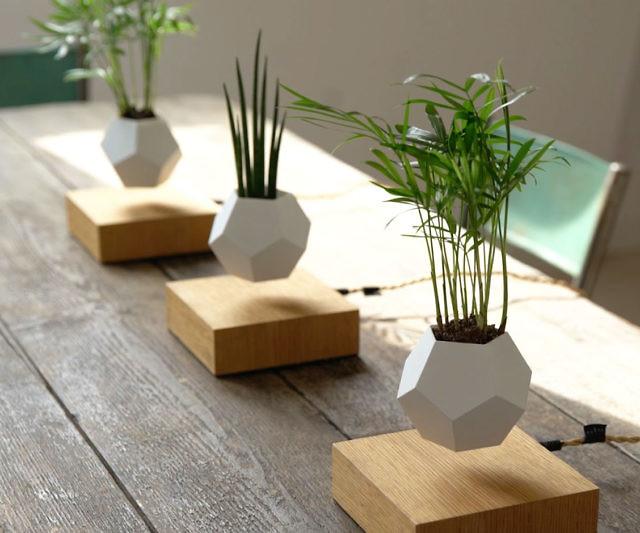 空中悬浮创意的室内盆栽植物