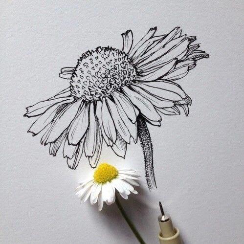 速写手绘花朵的形态