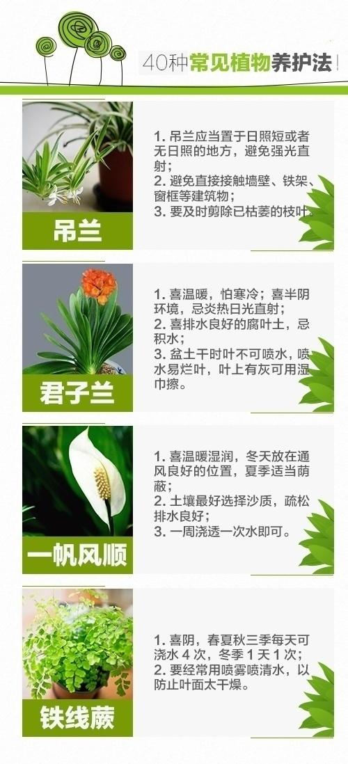 绿萝、发财树、文竹、芦荟、吊兰等40种室内盆栽植物的养护方法