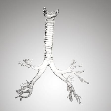 血管脉络系统的玻璃模型