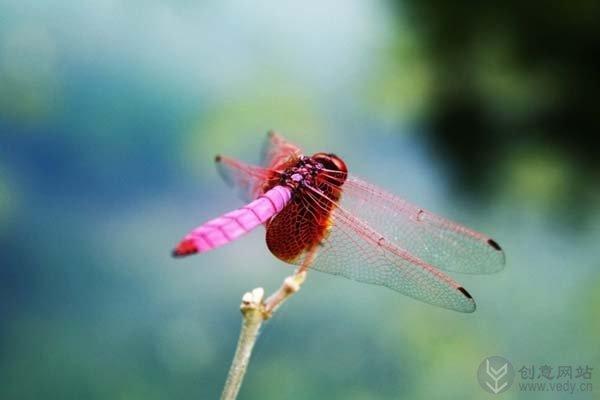 微距镜头下的昆虫世界