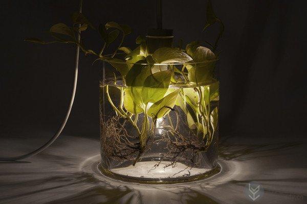 室内盆栽植物和LED灯具